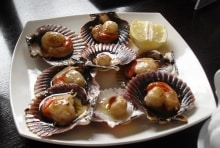 Scallops on the Camino