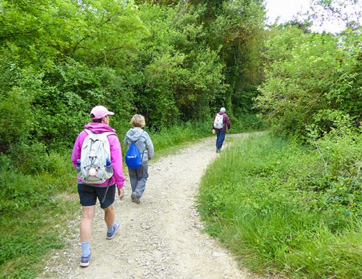 group walking Camino Frances section 1