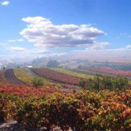 Autumn colour landscape