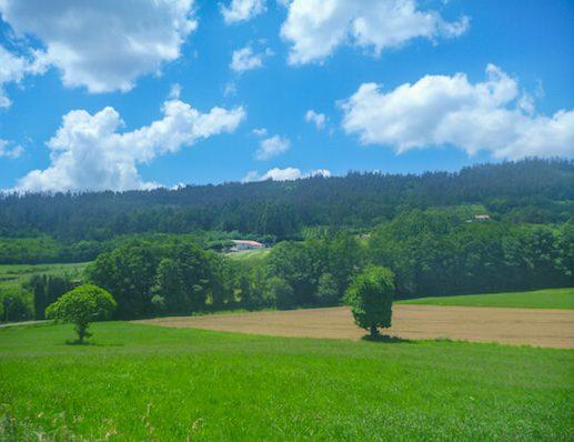 Scenery Camino Ingles
