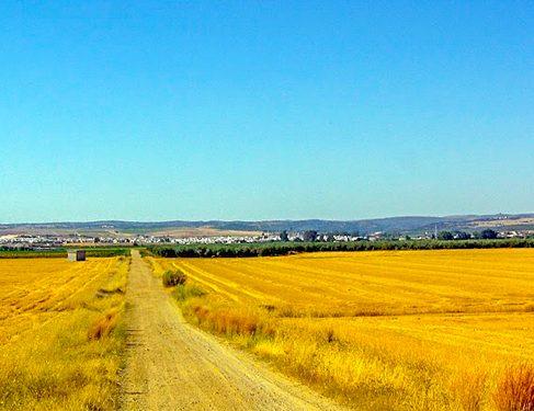 walking through farmlands Camino Mozarabe 1