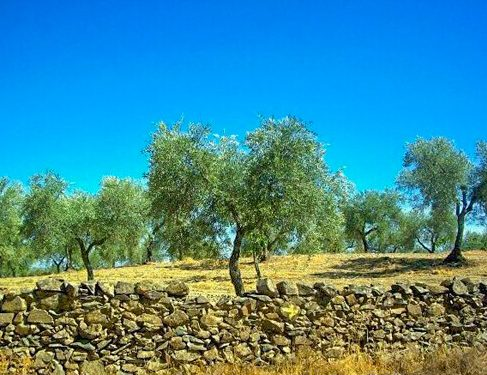 Camino Mozarabe 3