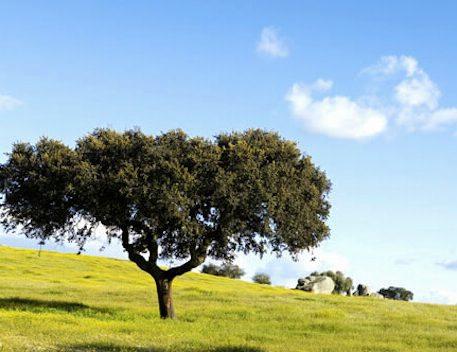 Camino Portugues 1
