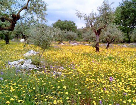 Springtime - Camino Portugues 2