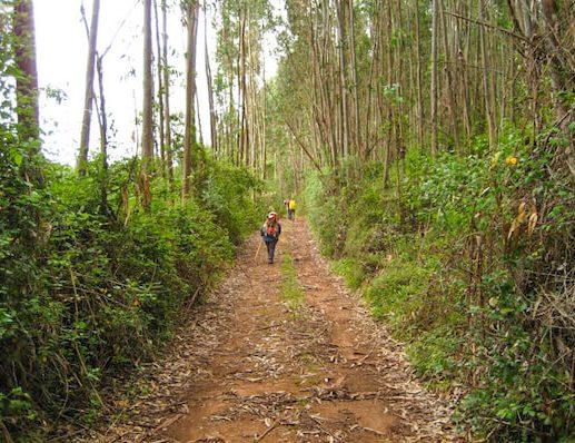Woodlands on Camino Portugues 2