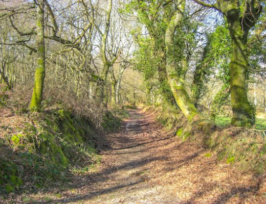 Walking through woodlands Camino Primitivo 2
