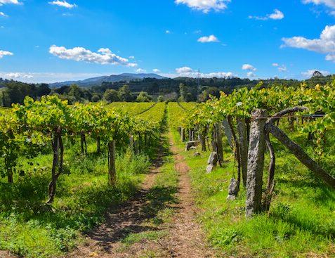 Vineyards Horse Ride Camino Portugues