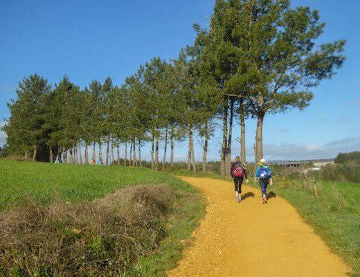 The Whole Camino Frances - pilgrim walking on the yellow path