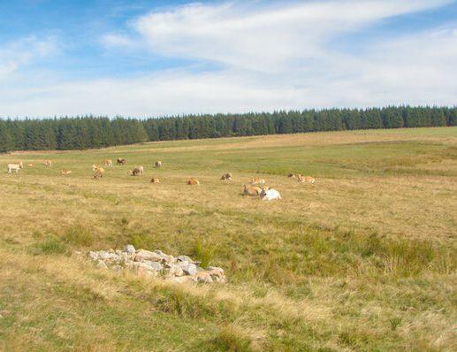 Via Podiensis 1 - landscape