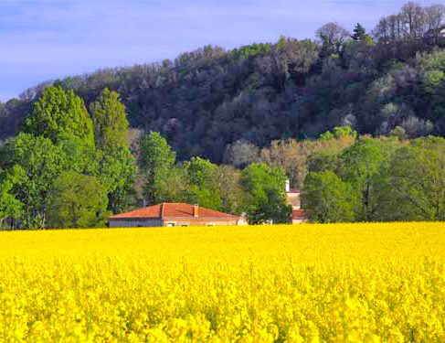 Via Podiensis 4 - farmland - colorfull