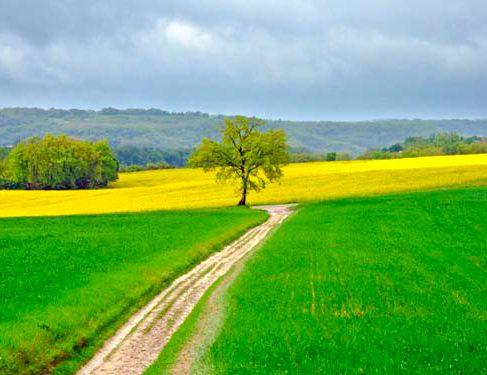 Via Podiensis 4 - trek through farm -