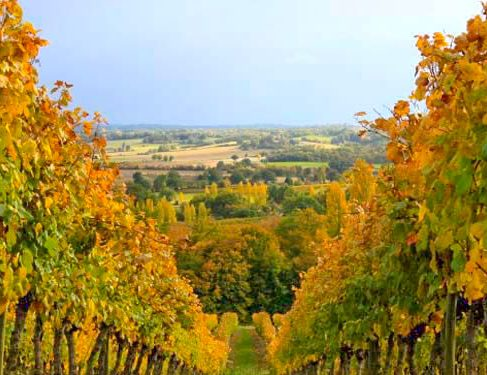 Via Podiensis 5 - vineyards