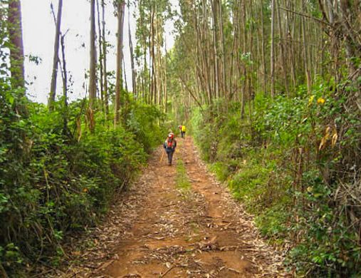 walking through the woodlands - Whole Camino Portugues