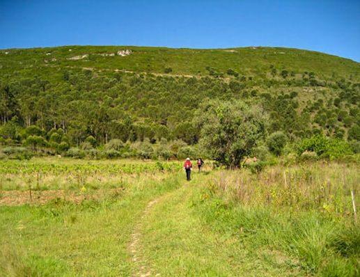 Whole Camino Portugues - pilgrim walking through countryside