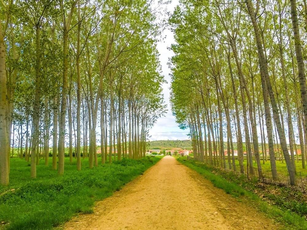 Camino Frances - Camino Ways