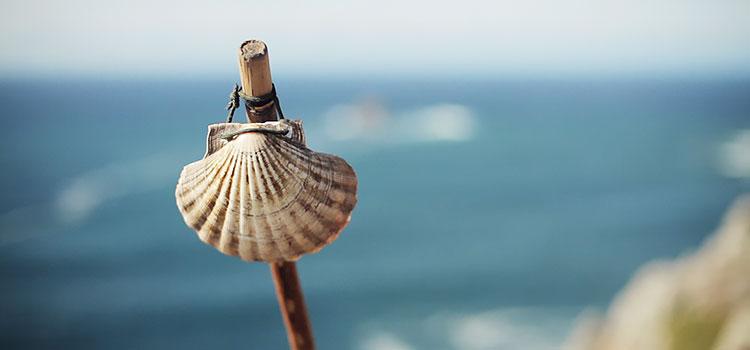 scallop shell Finisterre