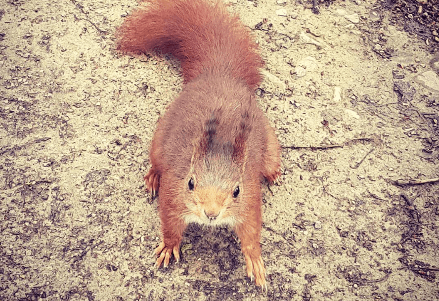 wildlife like squirrels are common on the Camino