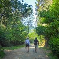 Couple walking away through the trees