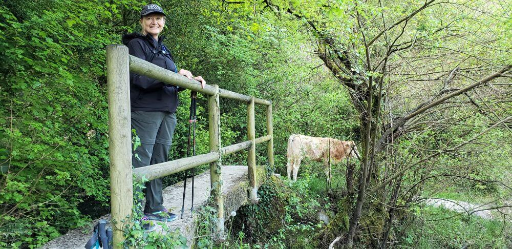 Susan waiting for a cow to leave the path